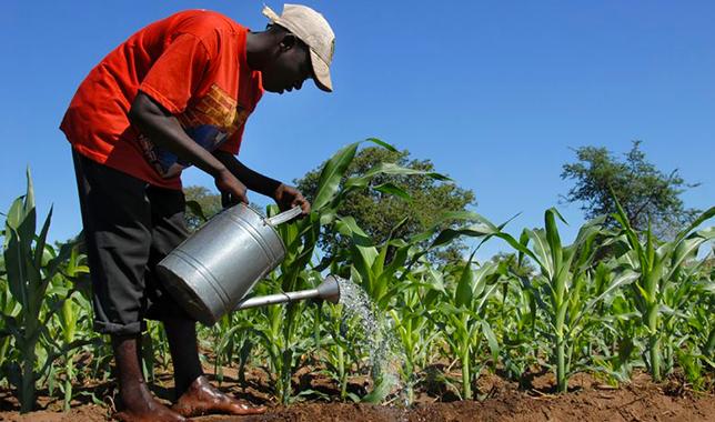 African Farmer - Farming