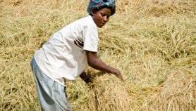 Les Etats tardent à garantir les droits fonciers des femmes
