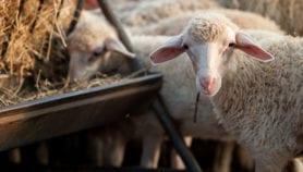 De la viande de labo pour réduire les émissions de CO2