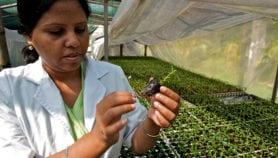 Nouvelles directives pour la recherche agricole en Afrique