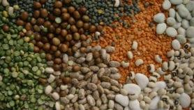 Lancement d'une plateforme pour soutenir la préservation de la biodiversité