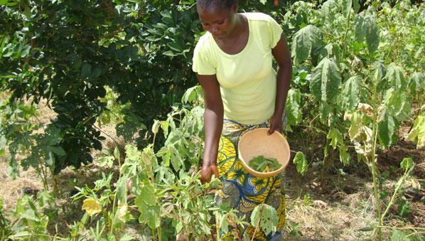 Burkina_vegetables_598x339