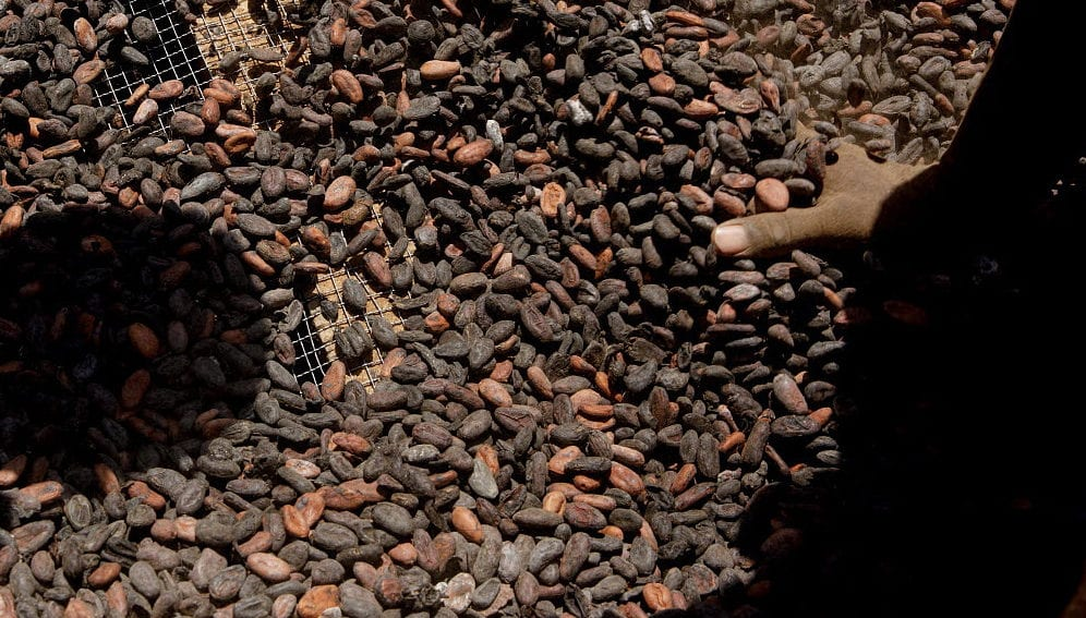 Cocoa Husks