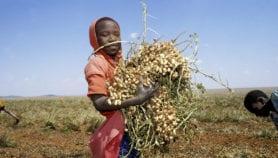 De la nécessité d'une agriculture climato-intelligente