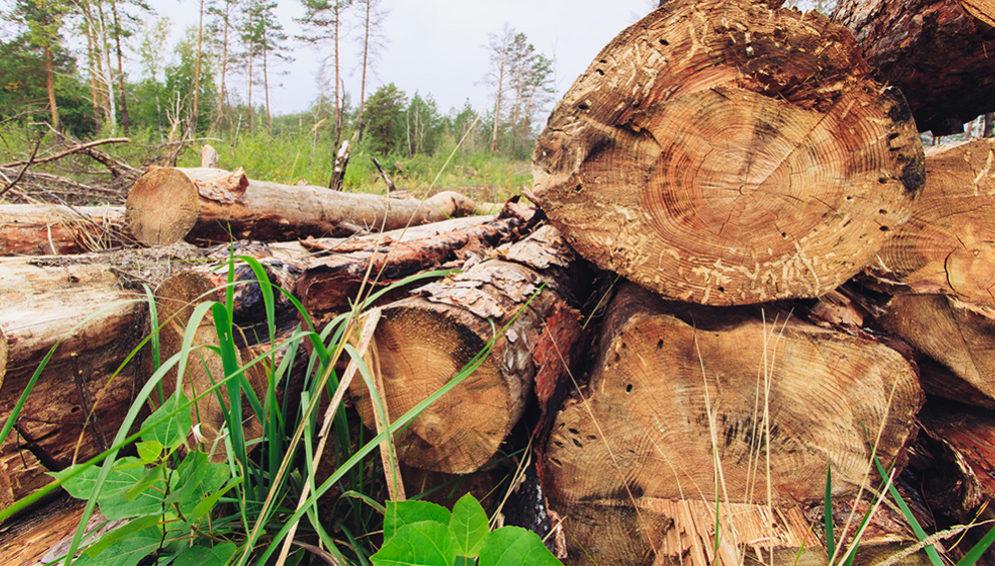 congo_deforestation.jpg
