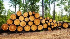 Le bois illégal, agent du changement climatique