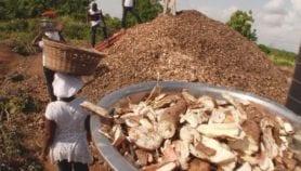 "Le Biogel, un carburant biologique ""made in Togo"""