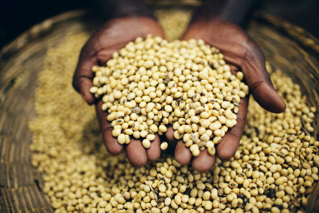 Food Security Agriculture Beans