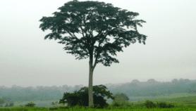 Forêts sacrées: Les croyances locales au service de la nature