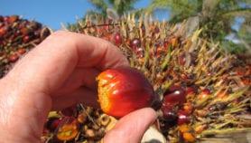 Le Gabon produit du biocarburant à partir de l'huile de palme