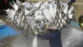 La pêche illégale coûte plus d'un milliard de dollars à l'Afrique