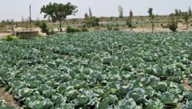 Progrès et défis de l'agriculture biologique au Sénégal