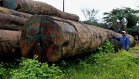 Un développement humain pour des forêts saines