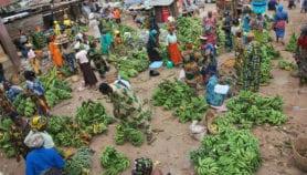 Assurer la sécurité alimentaire : les ressources clés