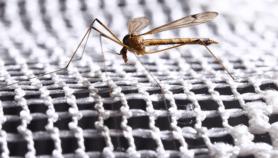 Mobilisation générale contre le paludisme en Afrique