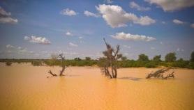La recherche pour soutenir l'agriculture au Sahel