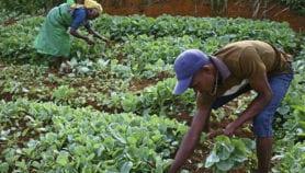 Les technologies géospatiales pour stimuler le secteur agricole