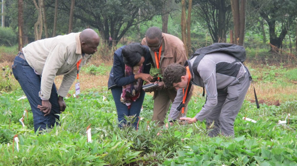 Researchers having a field visit at kabete