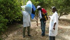 Le nucléaire pour éradiquer les insectes nuisibles