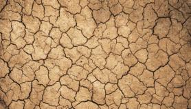 Le Sahel se mobilise contre la désertification