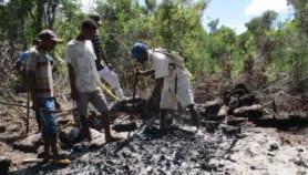 En Images : La forêt de Vohibola se meurt…