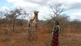 La sécheresse empêche le planning familial au Kenya