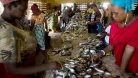Un projet pour booster le commerce africain de poisson