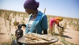 Climat : repenser les activités humaines pour sauver la planète