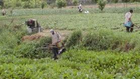Certains pesticides interdits en Europe sont vendus en Afrique