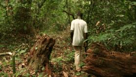 Forêts : La rémunération du Gabon fait débat