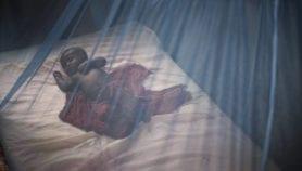La faible contribution de l'Afrique ralentit la lutte contre le palu