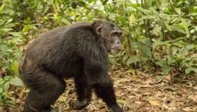 Le Cameroun sur le point de détruire un écosystème unique au monde