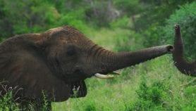 La conservation et la biodiversité, victimes collatérales de la COVID-19