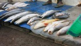 Du poison utilisé pour conserver des aliments en Afrique