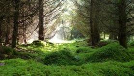 Davantage d'aires protégées pour renforcer les gains économiques