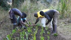 L'Afrique face au défi de la restauration des écosystèmes