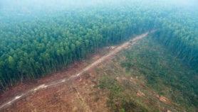 Restauration des forêts : Des zones prioritaires en Afrique