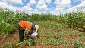 Les agriculteurs ignorent que leurs activités causent des chocs climatiques