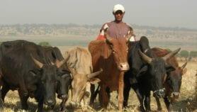 Le changement climatique à l'origine des conflits agriculteurs-éleveurs