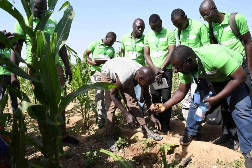 Researches working for improved seeds