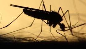 Le prix à payer pour éradiquer le paludisme