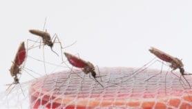 Une forme contagieuse de paludisme suscite des inquiétudes au Tchad