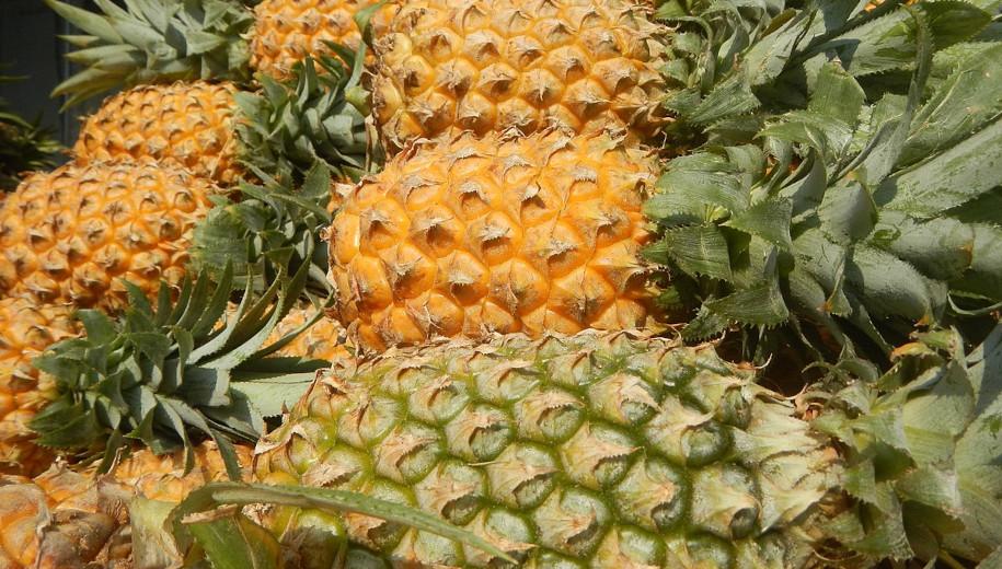Pineapple - main