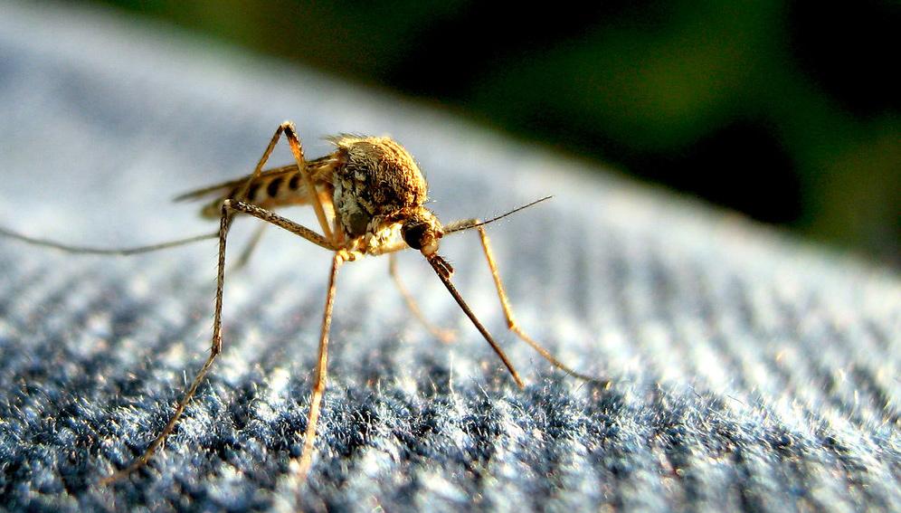 Mosquito podcast