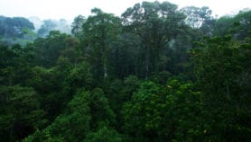 La perte des forêts primaires augmente à un rythme inquiétant