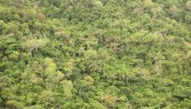Une base de données pour analyser les forêts d'Afrique centrale