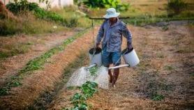 Les jeunes Africains doivent faire carrière dans l'agriculture