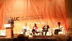 Renforcer la production de blé en Afrique
