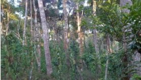 Madagascar : ancrer la culture de la vanille dans l'agroécologie