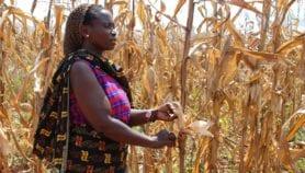 Bénin : La femme rurale ignorée dans la riposte au changement climatique
